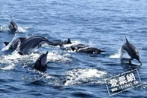 宜蘭賞鯨船行 賞鯨+繞島 孩童票